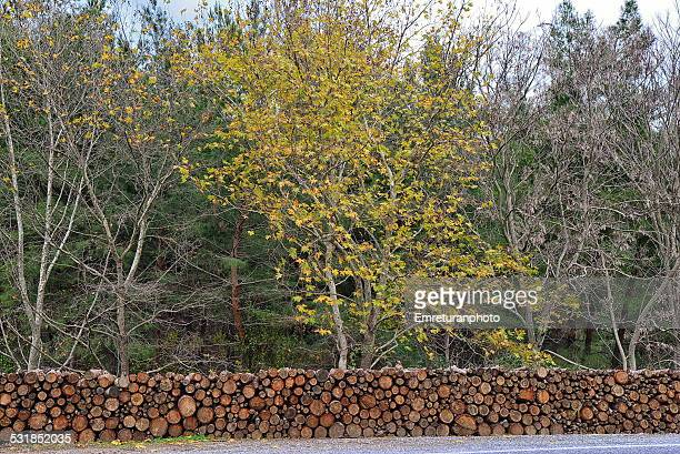 logs of pine timber stacked up by the road side - emreturanphoto stock pictures, royalty-free photos & images