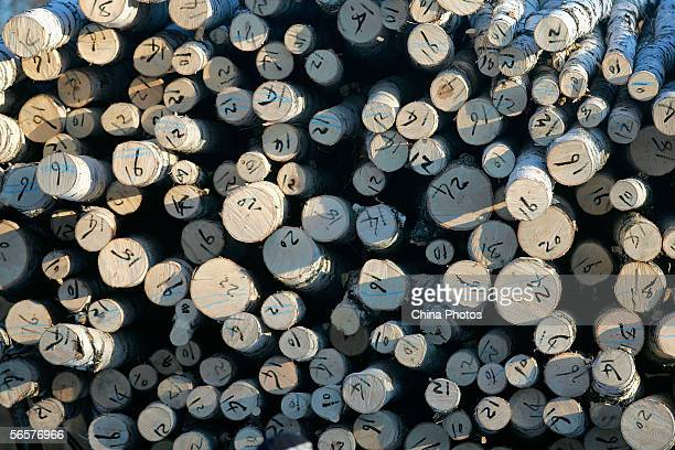 Logs of poplar trees to be transported are piled up at a forestry farm on January 8 2006 in Yichun City of Heilongjiang Province northeast China...