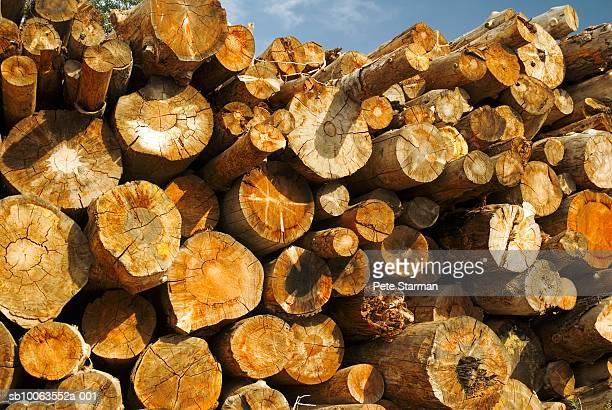 logs of wood, close-up - tronco d'albero foto e immagini stock
