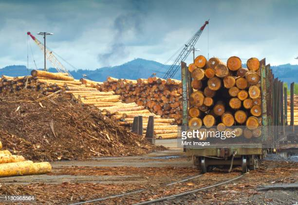 logs on railroad trailer - log stock pictures, royalty-free photos & images
