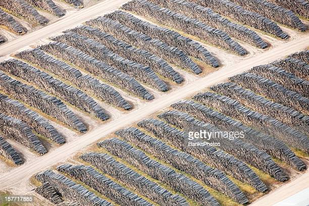 Logs Stacked at a Mill Aerial View