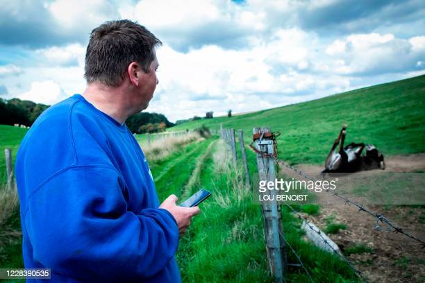 Loick Crampon, farmer, looks at one of his donkeys lying on the ground in his field, near Grumesnil, northern France on September 7, 2020. - One of...
