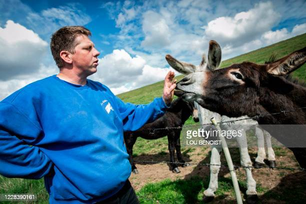 Loick Crampon, farmer, pets one of his donkeys, near Grumesnil, northern France on September 7, 2020. - One of Crampon's donkey has been attacked and...