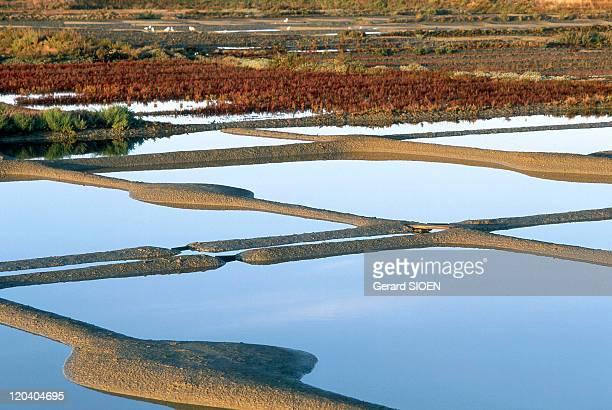 Loire Atlantique in Guerande France Guerande peninsula its salt marshes