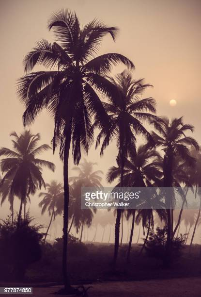 lomé,togo - togo stock pictures, royalty-free photos & images