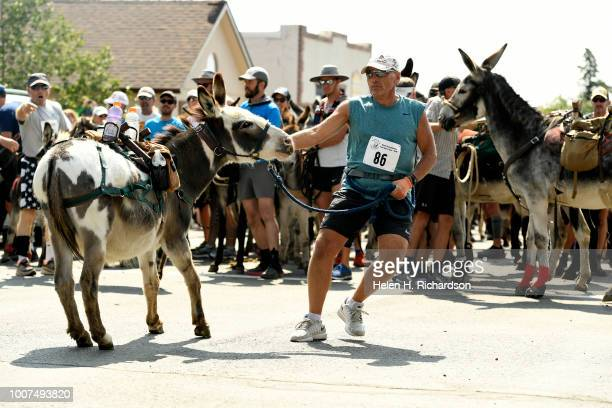 Lon Vincent of Sedalia tries to get his donkey Dakota to the start line of the 70th annual World Championship Pack Burro Race on July 29 in Fairplay...