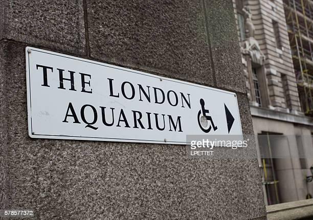 london aquarium - london aquarium stock photos and pictures