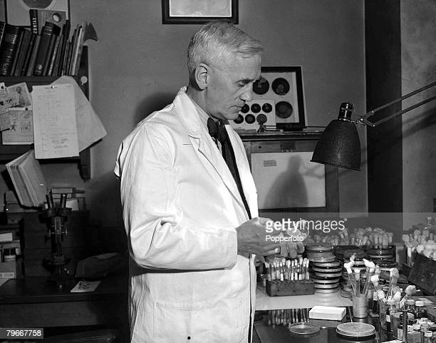 London England 17th December Sir Alexander Fleming discoverer of penicillin and lysozyme pictured at work in his laboratory at St Mary's Hospital in...