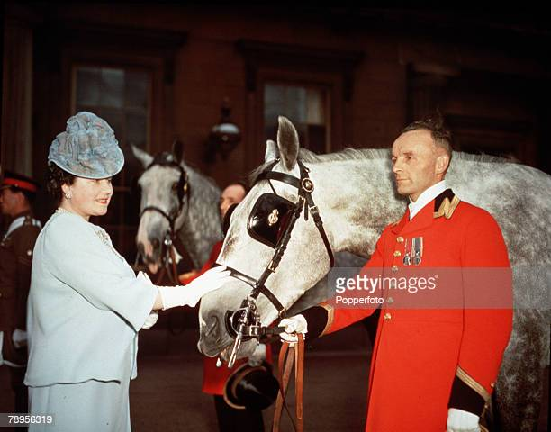 London England Queen Elizabeth pats one of the horses that had been presented to King George VI by the Queen of Holland at Buckingham Palace