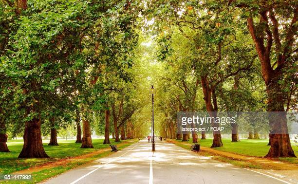 london ,hyde park - hyde park london stock pictures, royalty-free photos & images