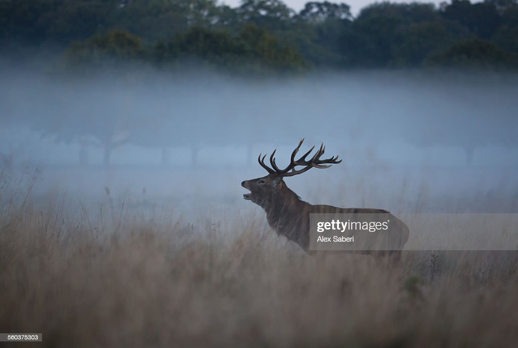 London , Richmond Park , England : Stock Photo