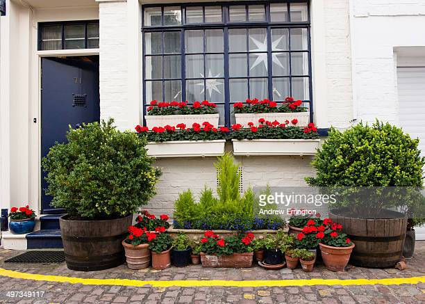 London, South Kensington Flower Pots make up a front garden for this mews house. Parking restrictions yellow line runs around the display
