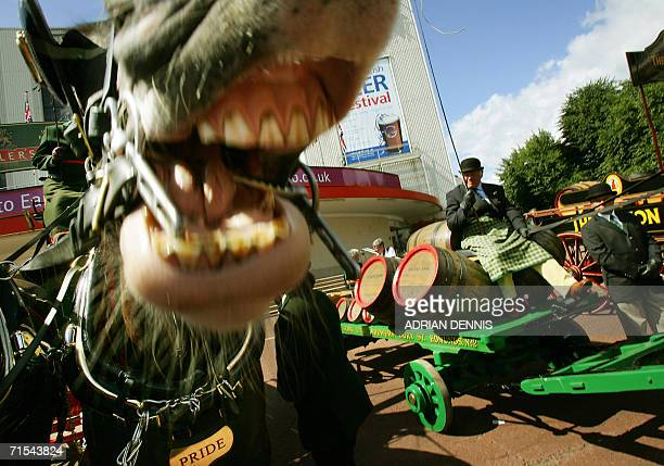 London, United Kingdom: A horse reacts while being photographed during a welcome parade of British brewers outside Earls Court in central London, 31...