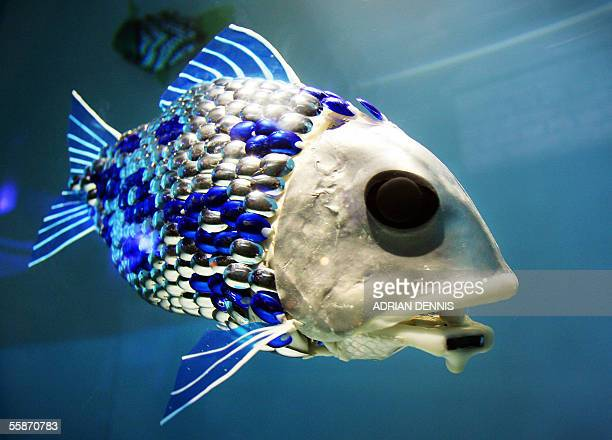 A robotic fish swims around its tank in The London Aquarium 07 October 2005 The aquarium unveiled this week three aquatic robots which were developed...