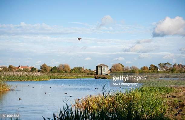 wwt london wetland centre - feuchtgebiet stock-fotos und bilder