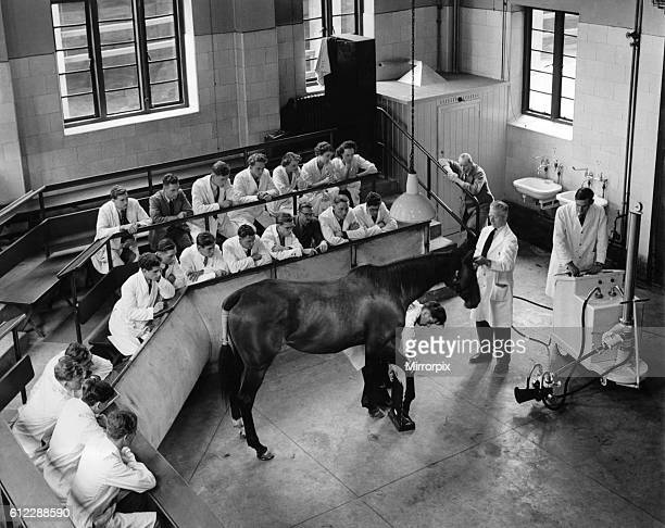 London with second year students during a demonstration in the use of X-ray on the offside fore foot of a thoroughbred mare. The subject for the...