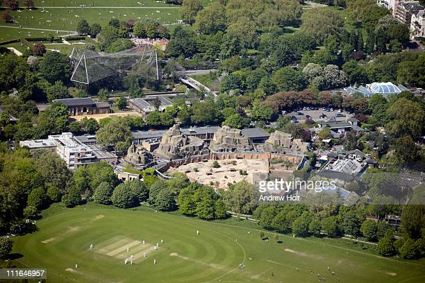 london zoo and cricket in regents park, london - cricket pitch stock pictures, royalty-free photos & images