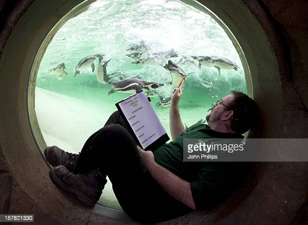 London Zookeeper Adrian Walls Poses For A Picture With Penguins As He Takes Part In A Photocall To Promote London Zoo'S Annual Stock Take Of Animals...