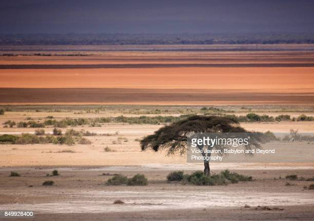 Lone Acacia Tree Against Layers of Light in Amboseli