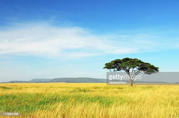 Lone Acacia, Parco Nazionale del Serengeti, Tanzania