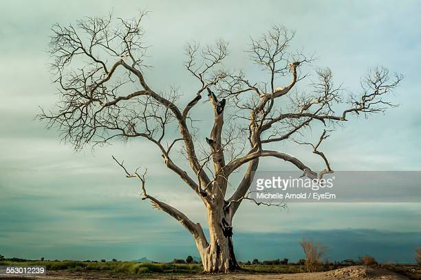 lone bare tree on landscape against sky - kahler baum stock-fotos und bilder
