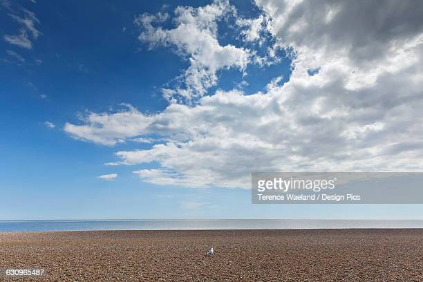 lone bird on an empty beach with blue sky and cloud over the ocean - aldeburgh stock photos and pictures