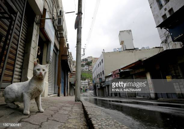 A lone cat wlks along a market street in the centre of the Jordanian capital Amman during a nationawide curfew imposed by the authorities in order to...