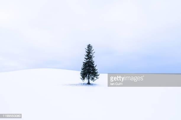 lone christmas tree in bibaushi, biei, kamikawa district, hokkaido, japan - snowfield stock pictures, royalty-free photos & images