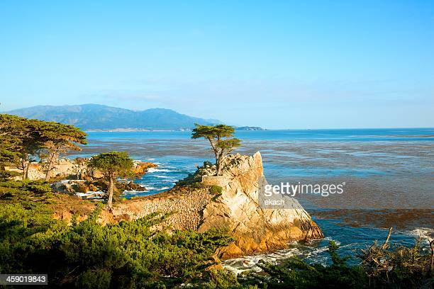 lone cypress pine tree at pebble beach ca - lone pine california stock pictures, royalty-free photos & images
