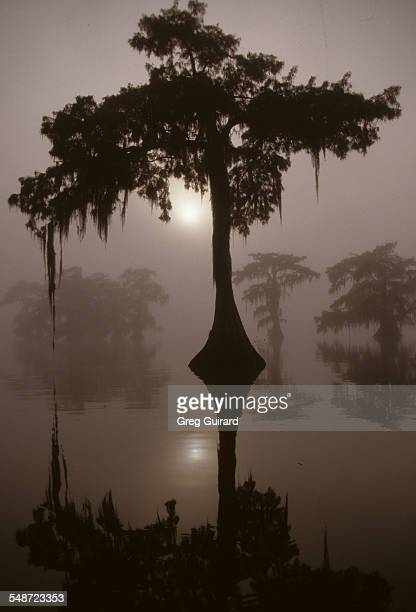 Lone Cypress Sunrise