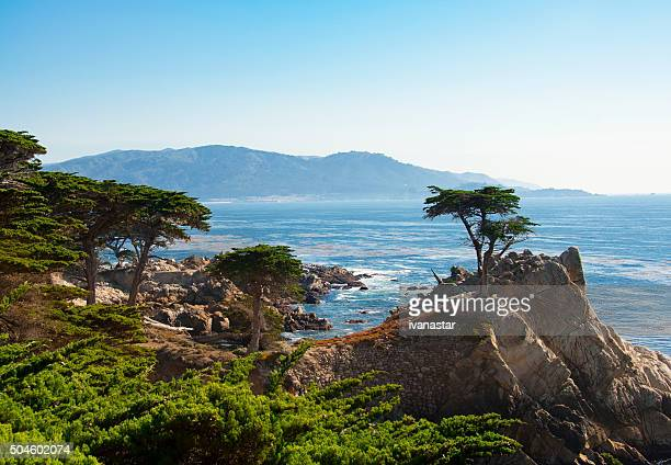 lone cypress tree - pebble beach california stock pictures, royalty-free photos & images