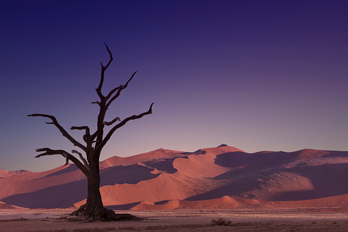 lone dried tree in the desert - gettyimageskorea