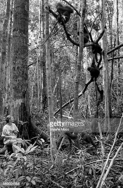 Lone Droscher Nielsen Director of the Nyaru Menteng Reintroduction Center watches baby orangutan Untung's reception by other apes Untung is spending...