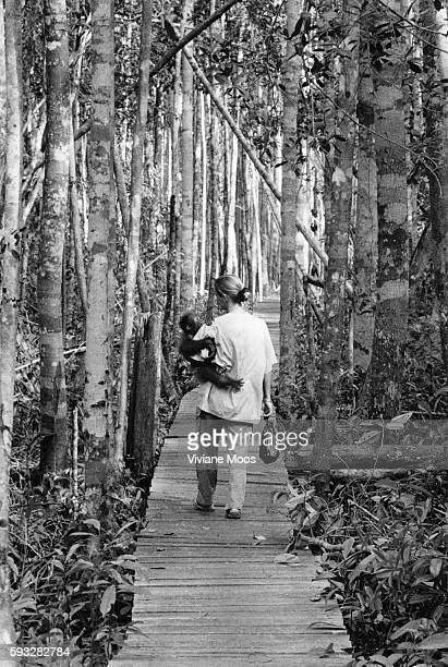 Lone DroscherNielsen brings Untung into the halfway forest where he will spend his first night away from her Although he is only one and a half years...