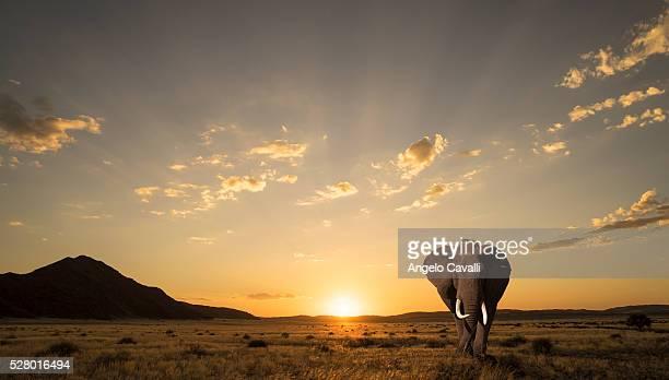 Lone elephant at sunset in Etosha National Park