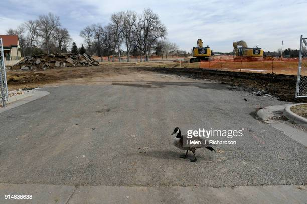 A lone goose looking lost walks across the road in front of large scale dirt moving operations and construction work at City Park Golf Course on...