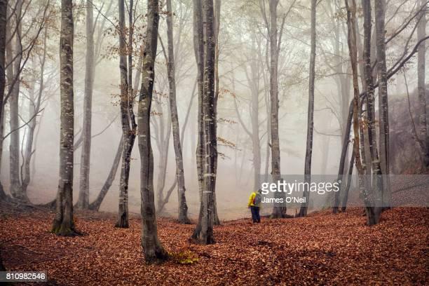 Lone hiker in misty beech forest