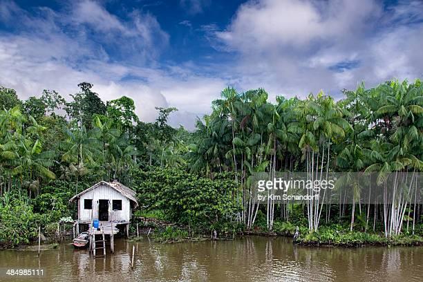 lone jungle house - estado del amazonas brasil fotografías e imágenes de stock