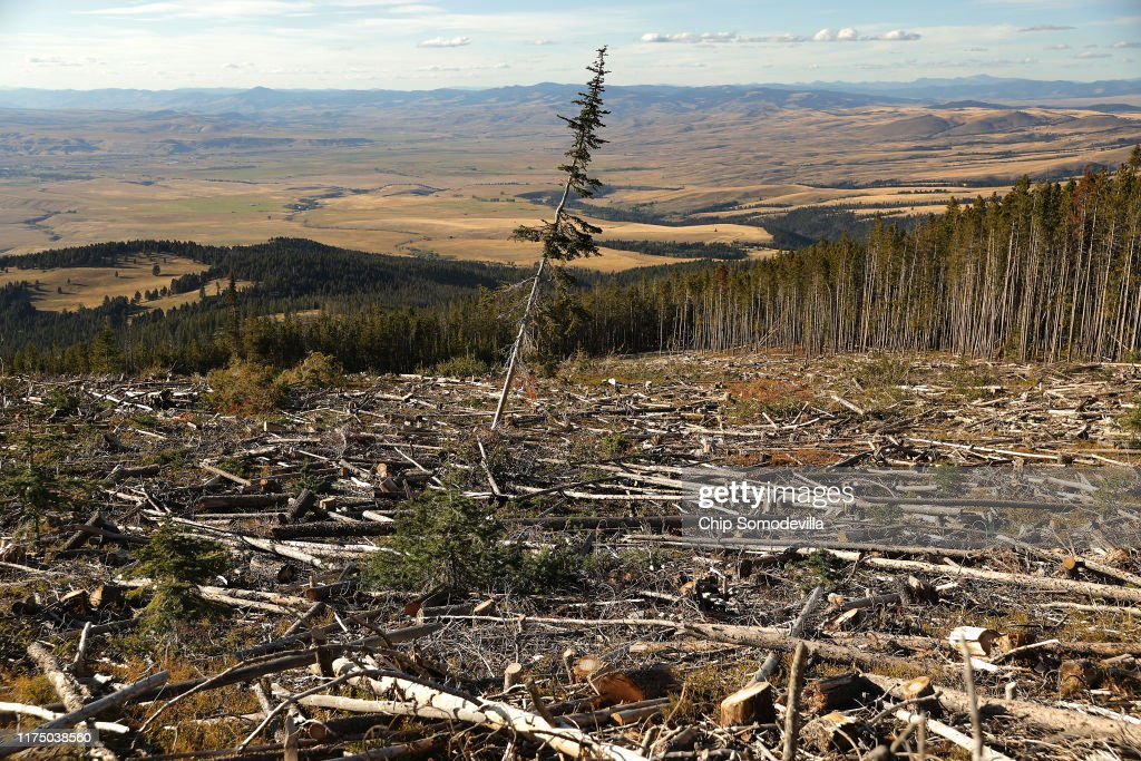Montana Forests Struggle With Climate Change : Fotografía de noticias