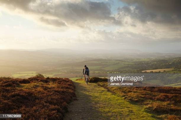 lone male mountain biking on an autumn evening. - riding stock pictures, royalty-free photos & images