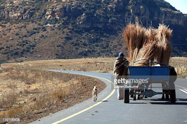 lone man and his dog walk with donkey cart - lauren hays photos et images de collection