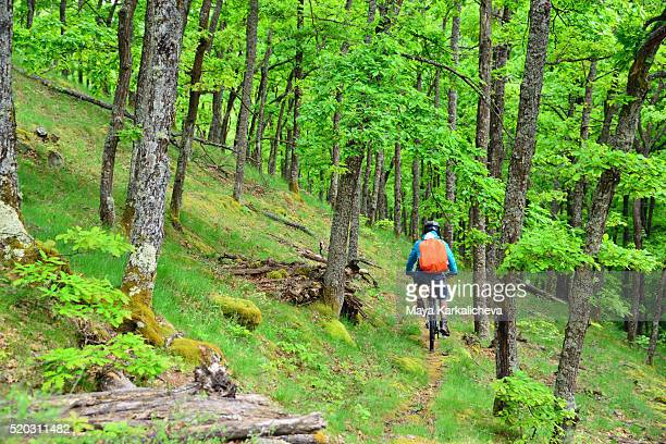 Lone mountain biker on a trail in the forest