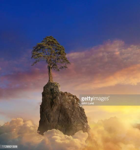a lone mountain tree at sunset - beauté naturelle personne photos et images de collection