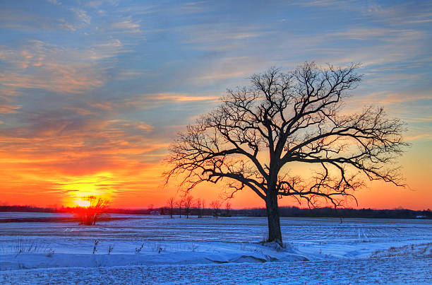 Lone Oak Tree in Winter Field During Sunset