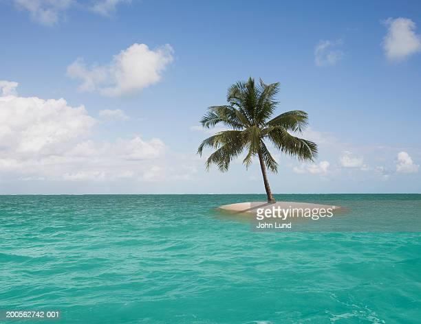 lone palm tree on small island - isola foto e immagini stock