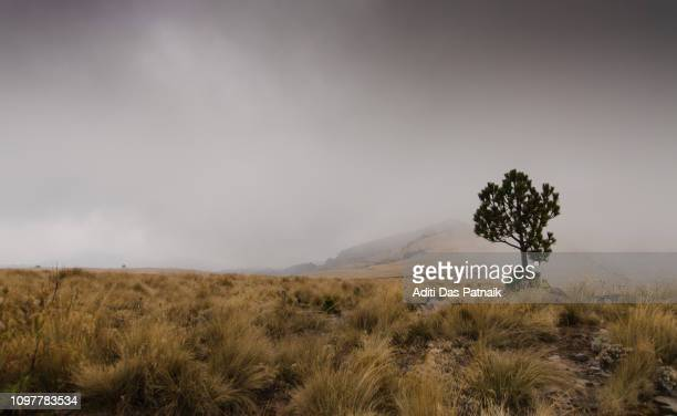 lone pine tree along the hiking trail of  iztaccihuatl-popocatepetl national park - alpine_climate stock pictures, royalty-free photos & images