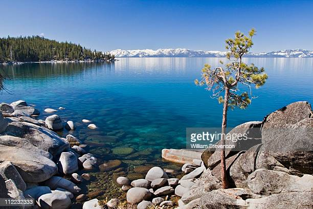 a lone pine tree on the rocky shore of lake tahoe in nevada - nevada stock pictures, royalty-free photos & images