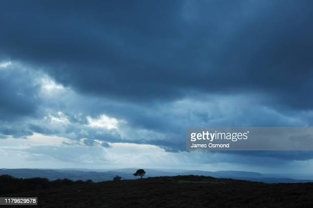 lone pine tree under stormy skies. - overcast stock pictures, royalty-free photos & images