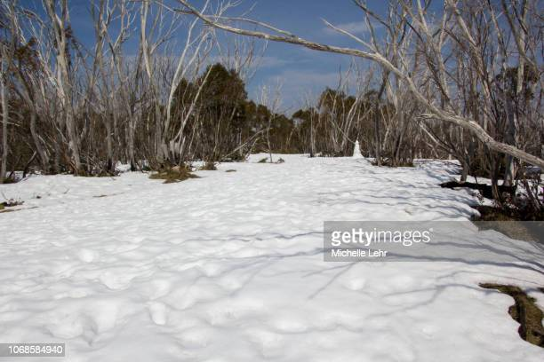 lone snowman in distance under australian snow gum trees in winter - snowfield stock pictures, royalty-free photos & images