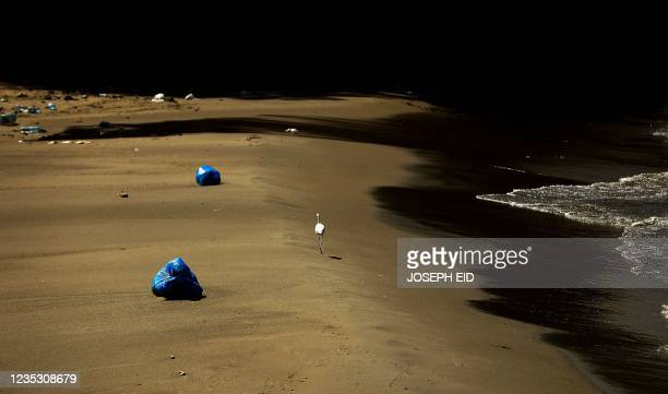 Lone stork walks past washed up garbage bags at the beach in the area of Antelias, north of the Karantina waste dump at the northern entrance of...